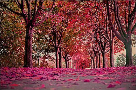 Autumn  by Nadeesha Jayamanne