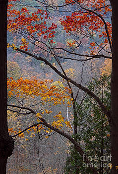 Barbara McMahon - Autumn Naturally Framed