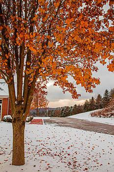 Autumn or Winter by April Reppucci
