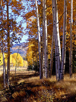 Kurt Van Wagner - Autumn Paint Chama New Mexico
