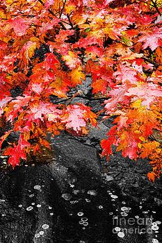 Dan Carmichael - Autumn Red I