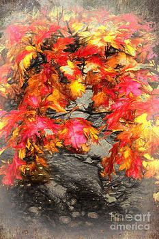 Dan Carmichael - Autumn Red II