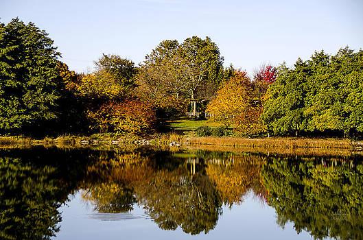 Julie Palencia - Autumn Reflection in the Garden