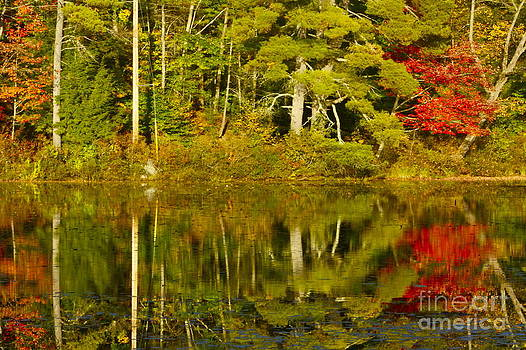 Autumn Reflections by Alice Mainville