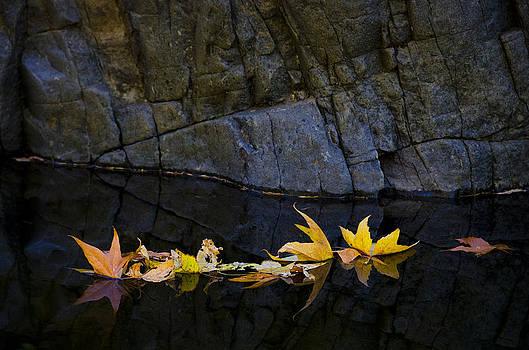 Saija  Lehtonen - Autumn Reflections