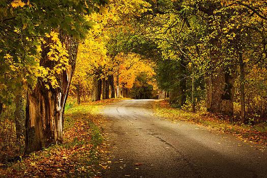 Autumn Road by Anna Grigorjeva