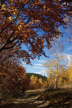 Bogdan M Nicolae - Autumn Road