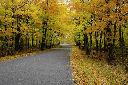 Autumn Road by Hans Castleberg