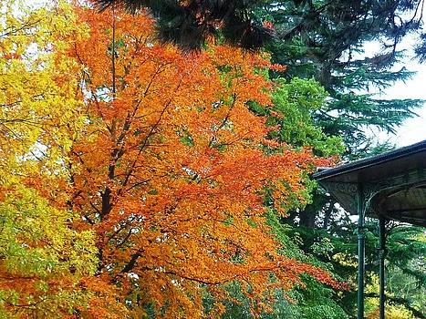 Autumn by Ronald Osborne