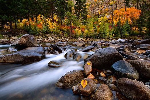 Autumn Rush by Dan Mihai