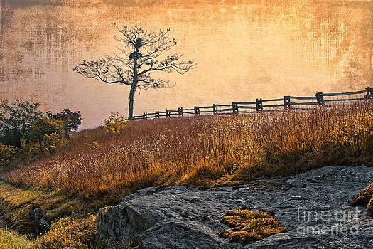 Dan Carmichael - Autumn Shadows II