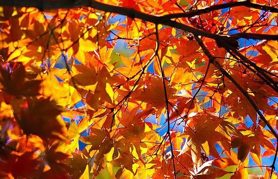 Autumn Sky by Brad Fuller