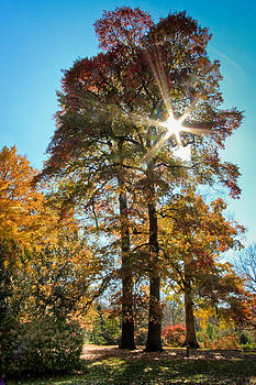 Autumn Spectacle by Victoria Winningham