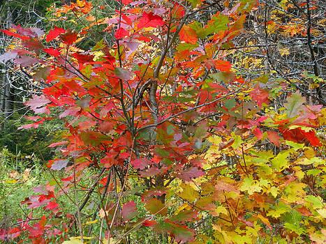 Autumn Splash 1 by Pema Hou