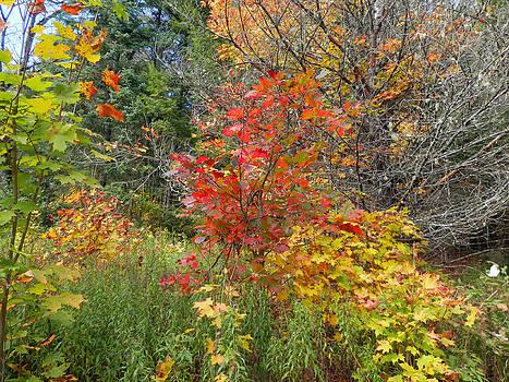 Autumn Splash by Pema Hou