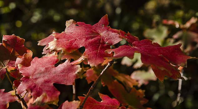 Autumn Splendor by Carl Nielsen
