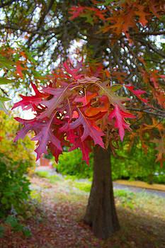 Autumn Splendor by Mamie Thornbrue