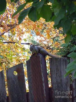 Autumn Squirrel I by Sonya Chalmers