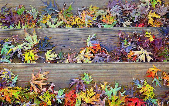 Autumn Steps by William Schmid