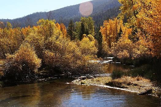Autumn Stream by David Winge