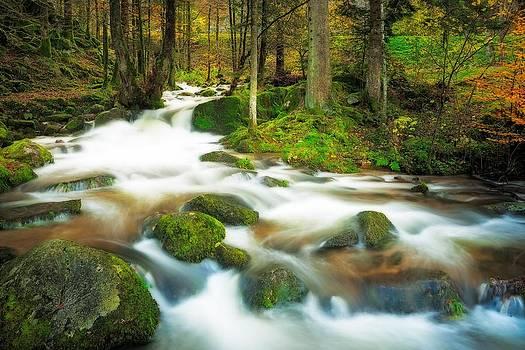 Autumn stream by Maciej Markiewicz