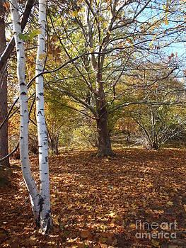 Autumn Stroll  by Kimberly Maiden