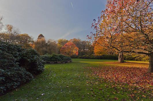 Autumn Sun Reflection by Maj Seda