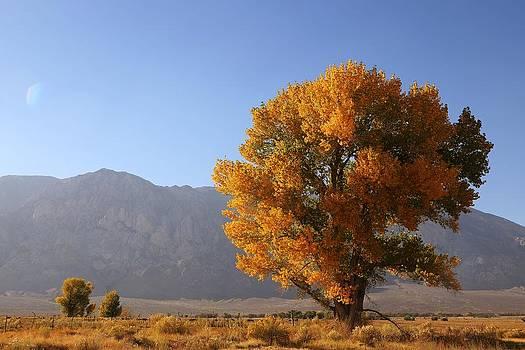 Autumn Tree by David Winge