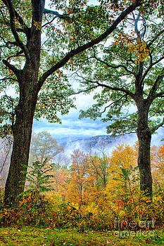 Dan Carmichael - Autumn Trees in the Blue Ridge