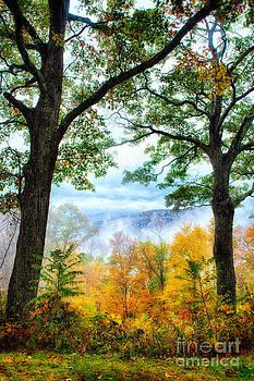 Dan Carmichael - Autumn Trees in the Blue Ridge II