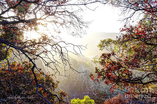 Autumn Trees by Kevin Ashley