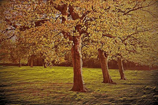 Autumn Trees by Nadeesha Jayamanne
