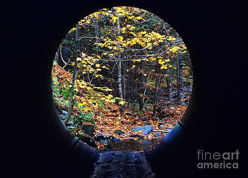 Autumn Tunnel Vision by Sharon L Stacy