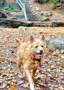 Autumn walk by Bob Jackson