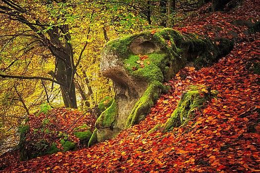 Autumn walk in forrest by Maciej Markiewicz