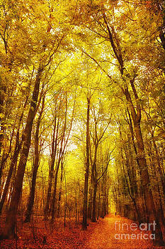 LHJB Photography - Autumn walk in the forest