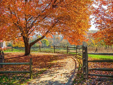 Autumn Walkway by Andrew Kazmierski