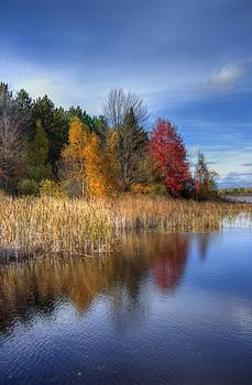 Autumn Wetlands by Megan Noble