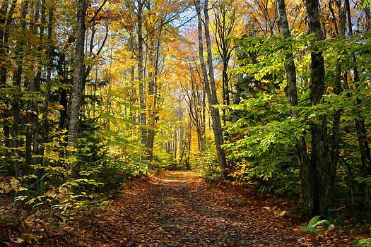 Autumn Wood by John Robichaud