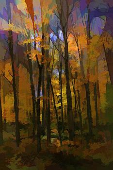 Autumn Woods - Paul Smiths by James Bullard