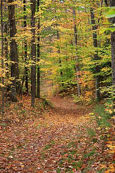 Michael Mooney - Autumn Woods 3