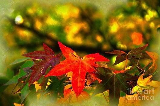 Autumnal Glory by Daniela White