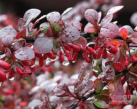 Autumnal Little Wonders_1 by Halyna  Yarova