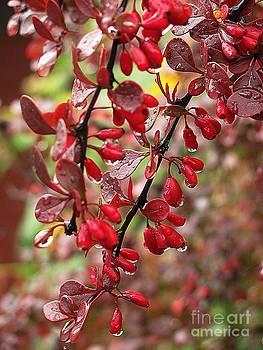 Autumnal Little Wonders_2 by Halyna  Yarova