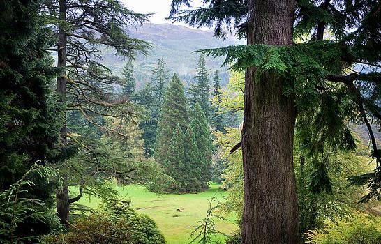 Jenny Rainbow - Autumnal Trees in Benmore Botanical Garden. Scotland