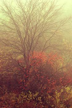 Jenny Rainbow - Autumnal Trees in Fog