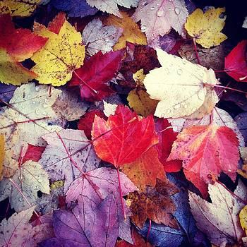 Autumn's Brightest by Virginia Cortland