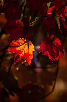 Karol  Livote - Autumns Glow