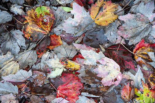 Autumn's Leaves by Allen Carroll