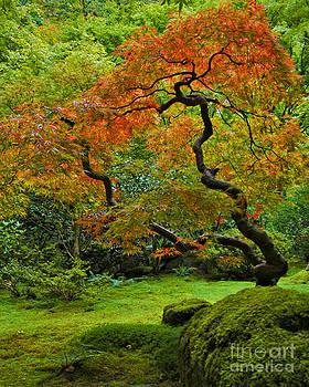 Autumn's Paintbrush by Jean Hildebrant